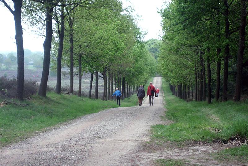 Wandelen op de Sallandse Heuvelrug